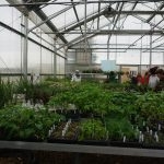Students grow annual and perennials from plugs from a commercial greenhouse and vegetables from seed.